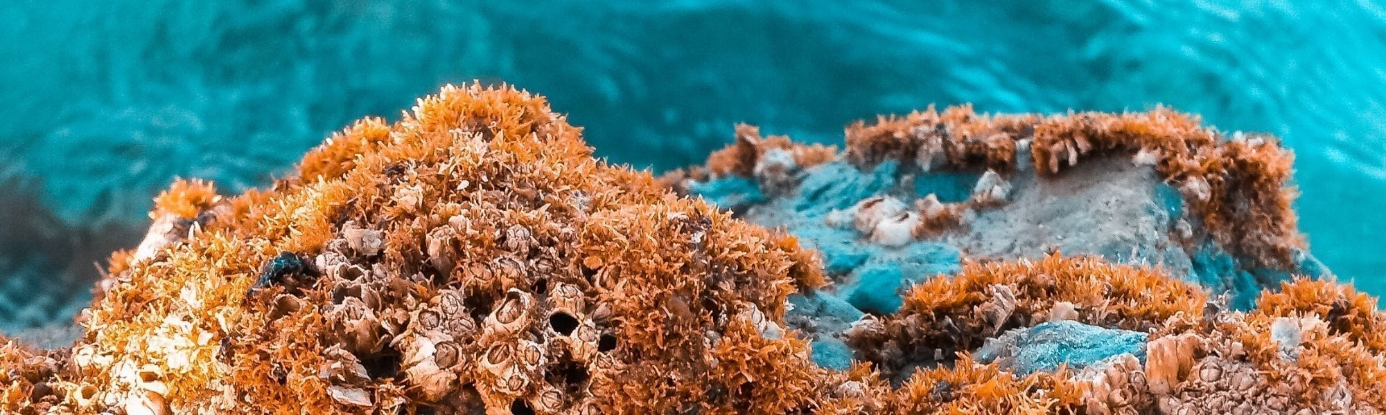 Coral reef with ocean water in background