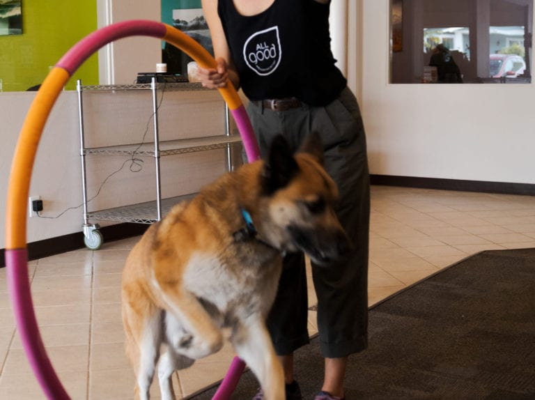 An All Good employee holds a hula hoop out while a dog jumps through it.